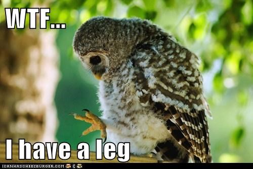 best of the week,birds,body,confusion,Hall of Fame,i have,leg,legs,looking,Owl,owls,wtf