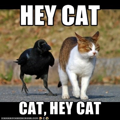 annoying,birds,Cats,crows,Hey,Interspecies Love