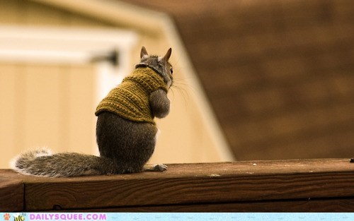 clothes,cold,squee,squirrel,squirrels,sweater,sweaters,winter
