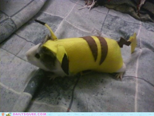 clothes,costume,dressed up,dressup,guinea pig,guinea pigs,pikachu,Pokémon,squee