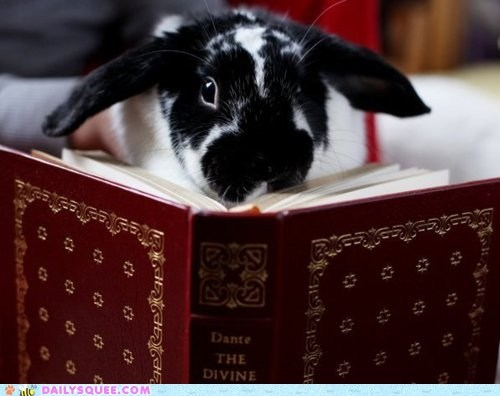 book,bunny,dante,divine comedy,read