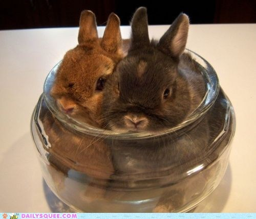 Bunday bunnies Hall of Fame happy bunday jar