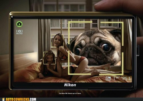 animals camera face recognition nikon pug - 6066302208