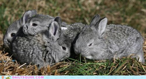 Babies bunnies grass grey pockets - 6066335232