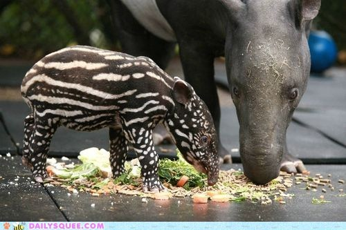 adorable baby spots stripes tapir