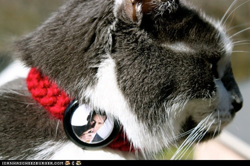 Cats collars etsy mad men products TV - 6066366720