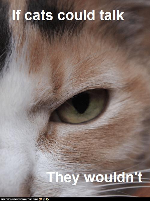 Cats jerks rude talk talking