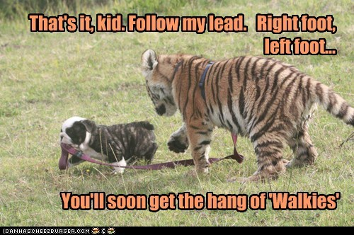 baby animals,dogs,follow,learning,puppy,teaching,tiger,walkies