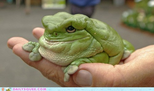 blob blorpy creepicute fat frog frogs green gross squee weird wtf - 6066706176