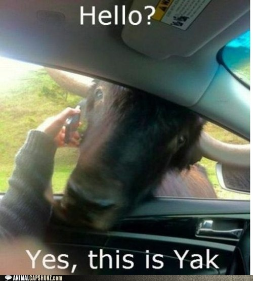 car,hello,phone,yak,yakety yak,yes this is dog