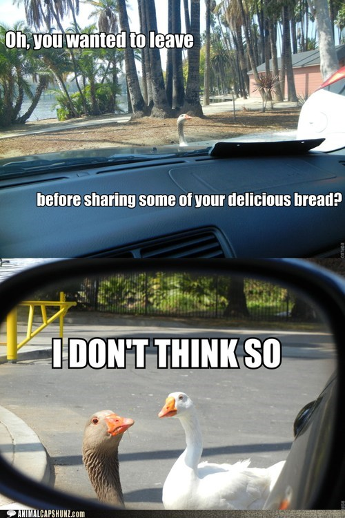 bread delicious geese i-dont-think-so scary sharing threat