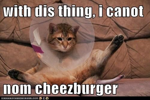 Cheezburger Image 6067196928