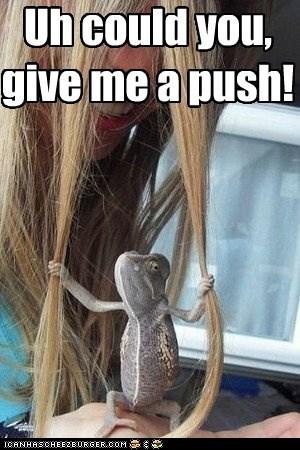 asking girl grabbing hair lizard push swing waiting - 6067645952