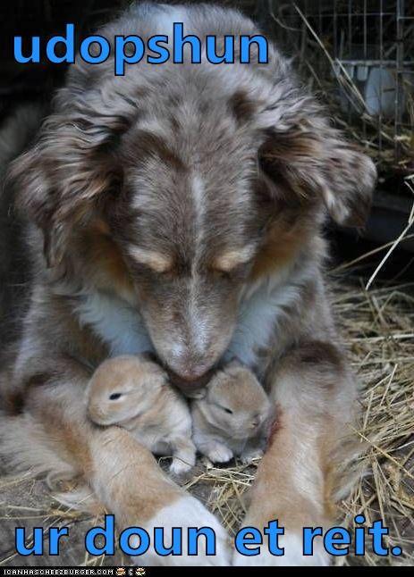 bunnies,dogs