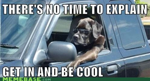 animals cool explain get in the car Memes time - 6067674112