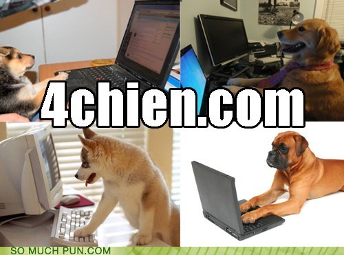 4chan,chien,dogs,four,french,literalism,similar sounding