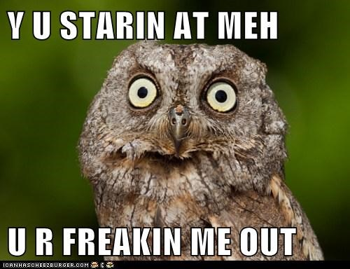 animal derp Owl Staring - 6068734208