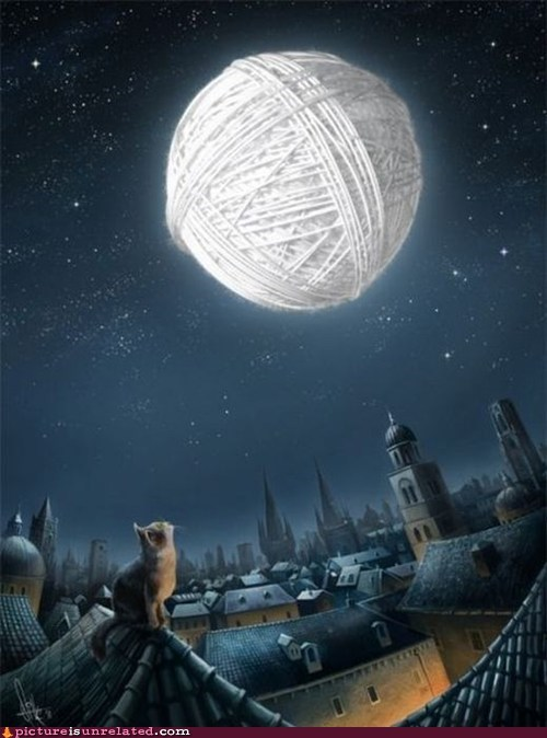 best of week cat moon Staring string wtf - 6068744448