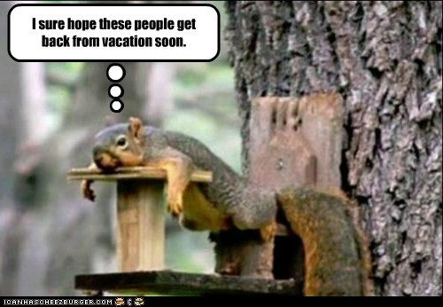 board food hope hungry people squirrel tired vacation