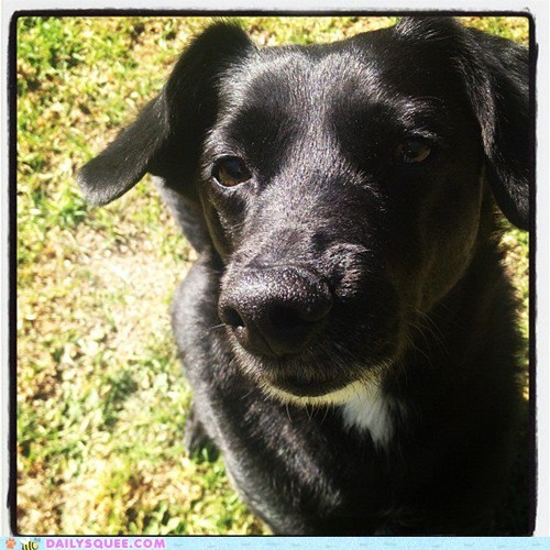 dogs garden pets reader squees sun - 6069024512