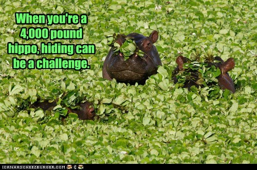 big,challenge,creative,hiding,hippo,leaves