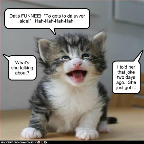 baby bad joke dumb joke kitten laugh - 6069301504