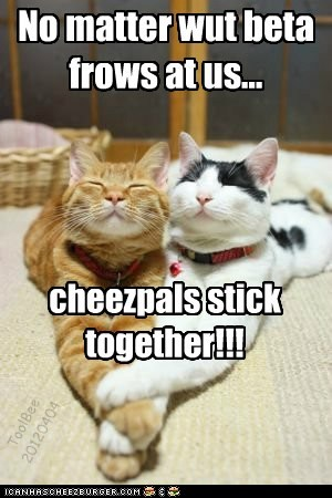 No matter wut beta frows at us... cheezpals stick together!!! ToolBee 20120404
