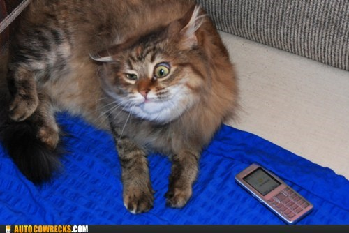 animals cat - 6069657344