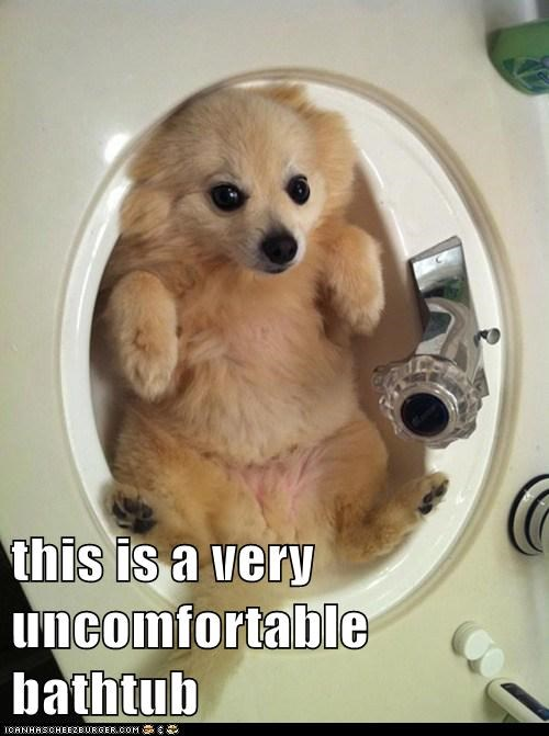 uncomfortable dog meme