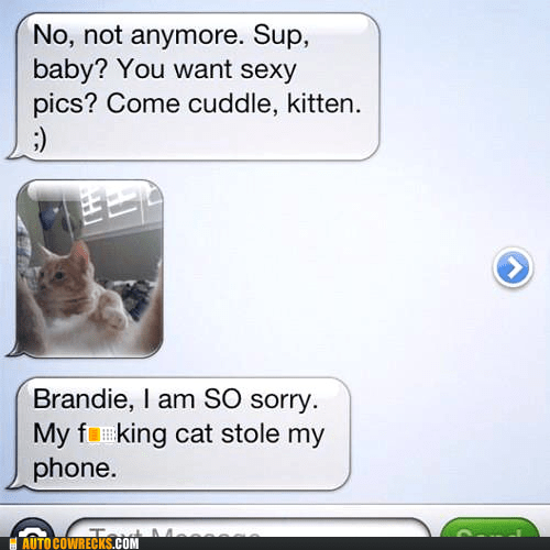 cat kitten kitty sexting - 6069755648