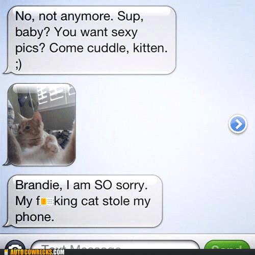cat kitten kitty sexting - 6069755648