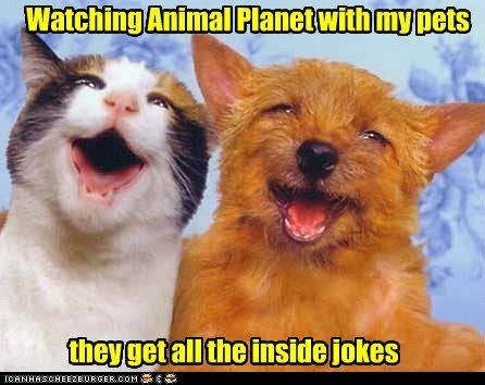 cat dogs laughing - 6070027008
