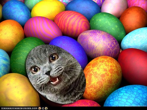 Cats easter easter egg hunt happycat holidays - 6070098944