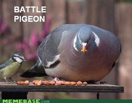 Battle Memes pigeon tank - 6070137088