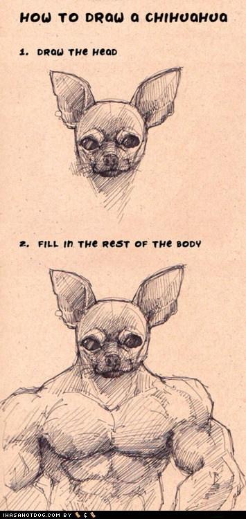 chihuahua,draw