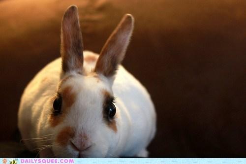 bunny,happy bunday,sneaky