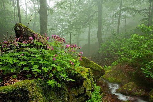 bulgaria,Forest,stream