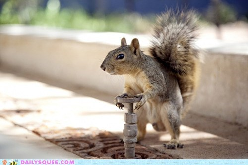 faucet,faucets,knob,squirrel,squirrels,turn,water,work