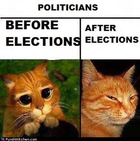 Cats funny politics - 6070602240