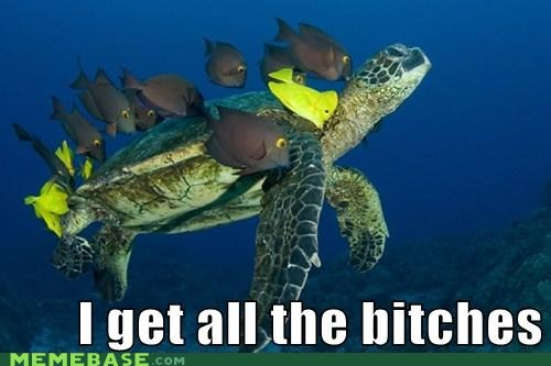 fish,ladies,Memes,turtle