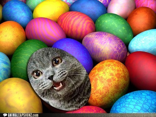 contest,easter,easter egg hunt,happy cat