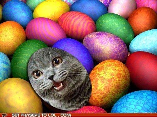 contest easter easter egg hunt happy cat sunday