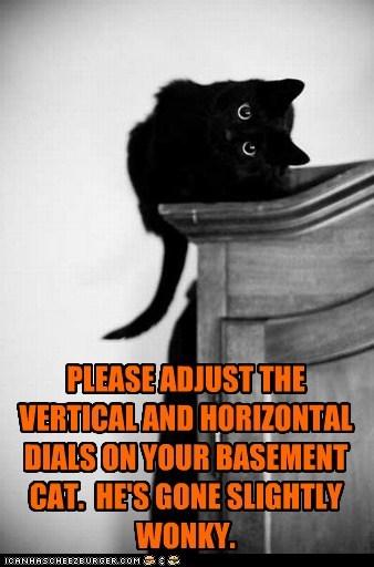 adjust cat fix head horizontal lolcat tilt vertical - 6070916352