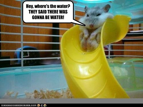 austerity budget cuts disappointing hamster Hey stuck water park water slide - 6071069952
