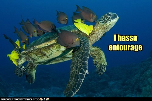 cool,entourage,fancy,fish,friends,hbo,turtle