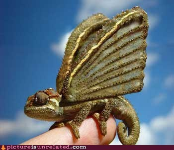 animal-non-human butterfly chameleon wtf - 6072094976