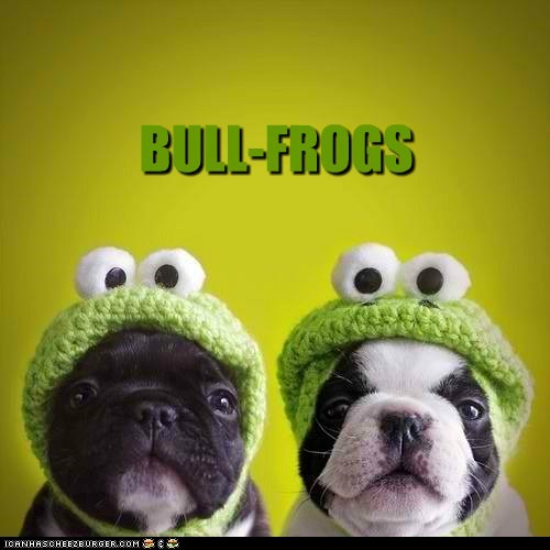 best of the week bulldog costume dogs frogs Hall of Fame puns puppies - 6072154880