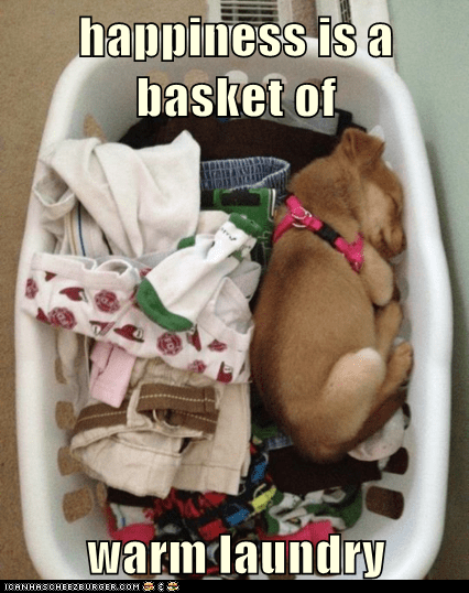 dogs happiness laundry laundry basket puppies puppy sleeping warm what breed - 6073047808