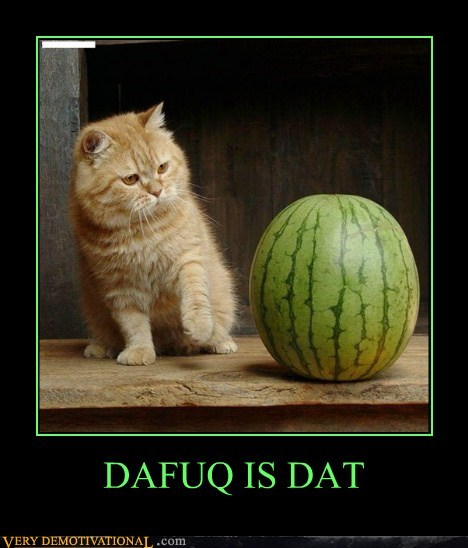 cat dafuq hilarious watermelon - 6073443072