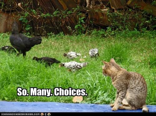 So. Many. Choices.